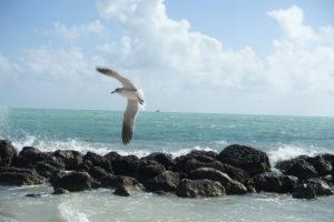 Möwe am Strand Fort Zachary Taylor Key West
